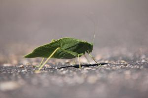 LEAFY BUG by AJNazzaro