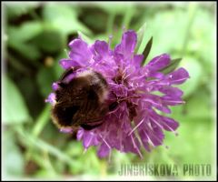 bumble-bee by freewai