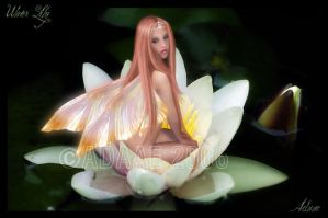 Water Lily by Adaae