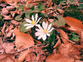 Ground Flowers by leavesXeyes