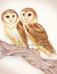 Barn Owls by Queen-Uriel