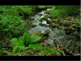 JUNGLE CREEKBED by NEME5IS