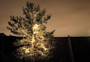 Christmas Tree 2011 by andyjh07