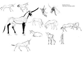 Arabian Unicorn study sheet by Wolfstarsilvestris