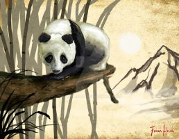 Asian Panda O: by FionaHsieh