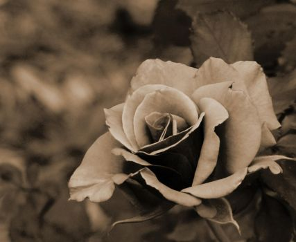 Simple. SEPIA by blither89