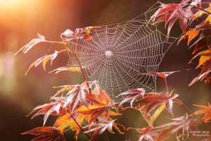 Autumnal spider dance by xXBellcatXx