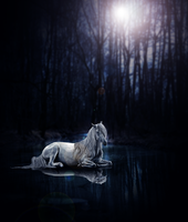 white horse by empluvie