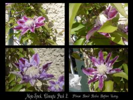 Clematis Stock Pack 2. by Meta-Stock