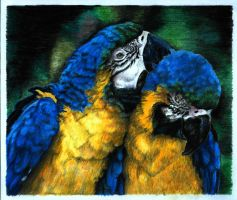 parrots by naglets