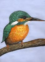 Kingfisher by littlemole