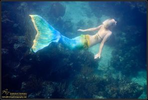 the mermaid 3 by AmyFantasea