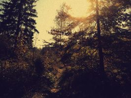 Enchanted forest by Topielica666
