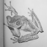 Frog by Hanuviel