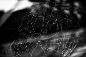 spider web by demor