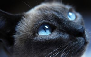 Another Cat image by ThusWeEnd