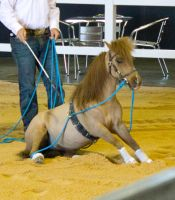 STOCK - 2014 Total Equine Expo-1 by fillyrox