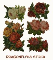 Roses by BFstock