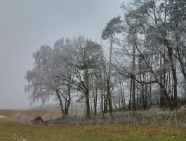 dismal prospects by Mittelfranke