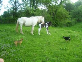 Snowflake and 2010 colt by cattlebaron1