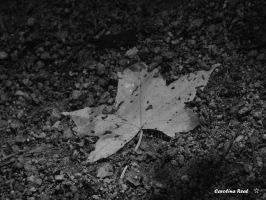 Leaf out of colors by Avril000Carolina