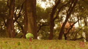 Lumpy the Tree all alone... by ricebowlfactory