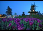 flowers and a water mill by emrepullukcu