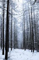 Winter forest 2 by paradoxofminds