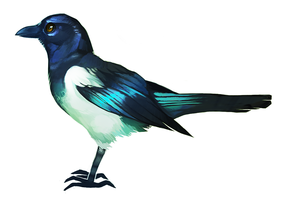 Magpie 1 by tuliplou