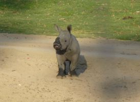 Rhino Calf by BlackFlameVampire