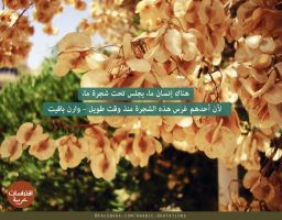 Tree Story - Quote 77 by muslim2proud