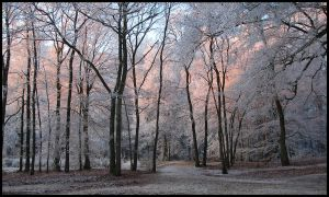 In Hoarfrost Wonderland by jchanders
