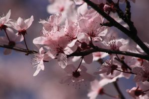 Spring in Pink by thevioletglamour