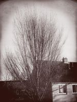 There is no tree like home. by xJNFR
