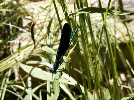 Damselfly by historicbridges
