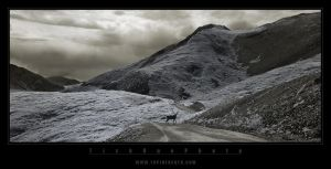 The way of the Caribou I by tisbone