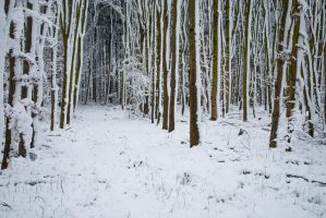 Snowscape Stock 67 by Sed-rah-Stock