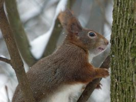 Squirrel 200 by Cundrie-la-Surziere