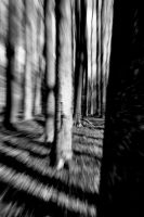 Running through the woods by tomsumartin