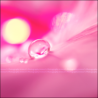 Pinky morning by Irrence