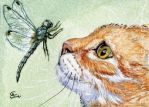 ACEO Red cat and Dragonfly by sschukina