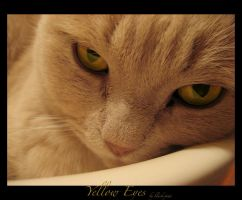 yellow eyes ... by black-piwi