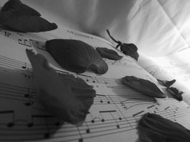 Rose Petal and Melodies by Funkyzebra