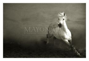 Horse 1 by mayonaise1980