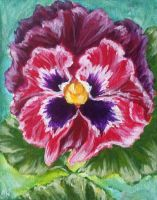 Pansy by caitiedidd