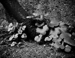 Urban Plant Life by parablev
