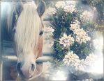 Horse vs Flower 5. by BiekeBloompje