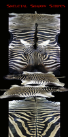 Skeletal Shadow Stripes-Zebra by Zhon