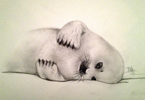Seal Pup In Snow by Yukilapin
