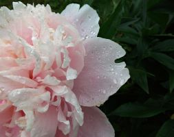 Peony - 2 by Villainess-Vi